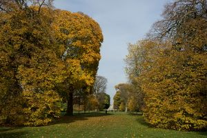 Autumn colour at Kew