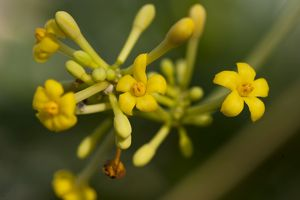 <b>Endangered plants</b><br>Selection of 132 items