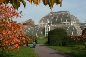 Cherry Walk and the Palm House in Autumn