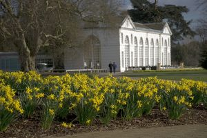 Daffodils on the Broad Walk in