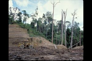 Deforestation in Brunei