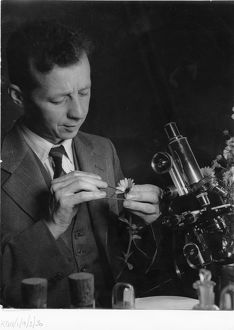 Dr R. Melville, scientist at Kew, 1940's