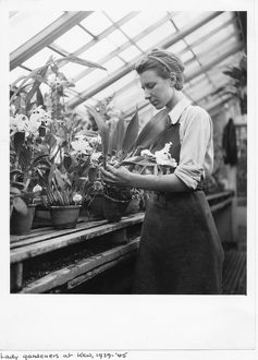 Female gardener working in the orchid house, during World War II
