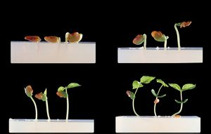 Germination and growth of seeds