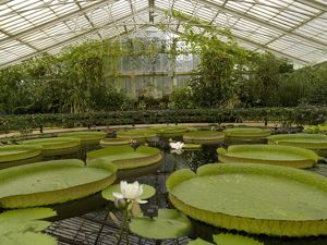 Interior of the Waterlily House