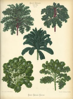 Kale and Brussels Sprouts varieties