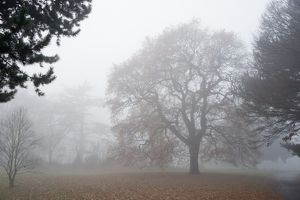 Kew Gardens in the mist