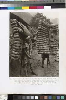 Men laden with 'Brick tea' for Tibet