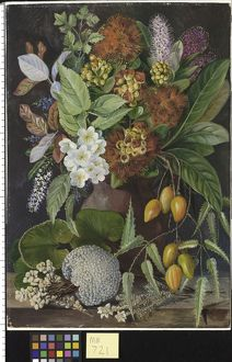 New Zealand Flowers and fruit Marianne North Painting 721