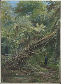 Painting 056, View under the Ferns at Gongo, Brazil