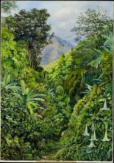 Painting 132, Valley behind the Artist's's house at Gordontown, Jamaca
