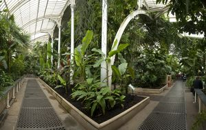 Palm House interior