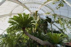 Palm House Interior at Kew