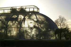 Palm House silhouette