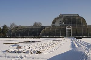 Palm House in the snow