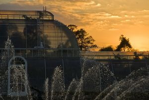 Palm House at sunset