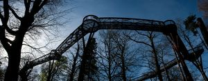 Tree top walkway panorama
