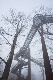 treetop walkway in the mist