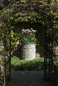 Urn with tulips.