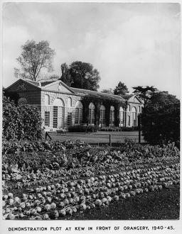 Vegetables growing in the Demonstration Plot, RBG Kew, WWII