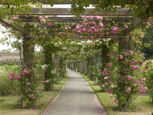 view through the pergola