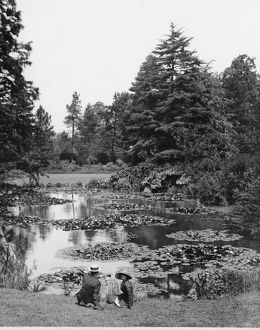 Waterlily Pond, Kew Gardens, circa 1900