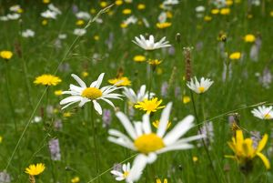 Wild flowers in the Slips at Wakehurst Place
