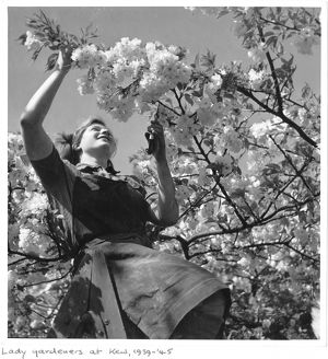 Women gardeners at Kew, 1939-1945
