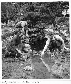 Women gardeners, The Rock Garden, RBG Kew, World War II