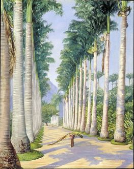 085 - Side Avenue of Royal Palms at Botafoga, Brazil