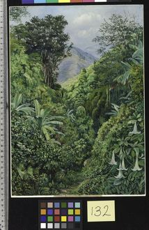 132. Valley behind the Artist's House at Gordontown, Jamaica