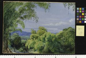 149. View over Port Royal, Jamaica, with Bamboos in the foregrou