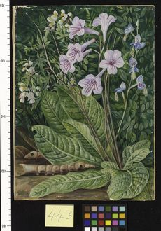 443. South African Flowers, and Snake - headed Cater pillars