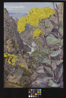 448. View of the valley of Ceres, from Mitchell's Pass,'Cabbage 448