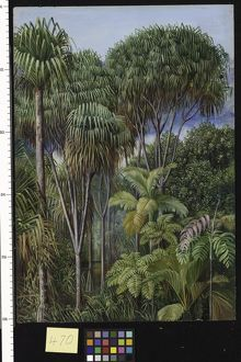470. Screw-Pines, Palms, Tree-Ferns, and Cinnamon Trees on the h