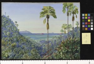botanical art/marianne north/474 coco mer gorge praslin distant view mahe