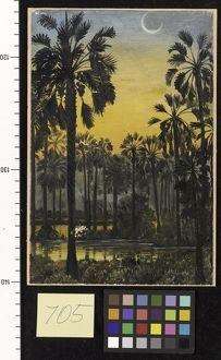 705. Palmyra Palms in Flood-time