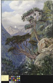 714. View of the Otira Gorge, New Zealand