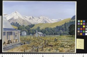 717. Castle Hill Station, with Beech Forest, New Zealand
