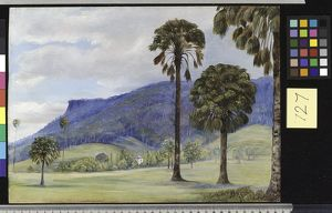 727. View at Illawarra, New South Wales