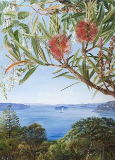 749. Two Australian shrubs, with Sydney Harbour below.