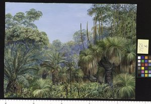 756. Forest Scene in West Australia