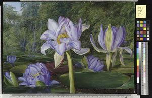 783. View in the Botanic Garden, Brisbane, Queensland