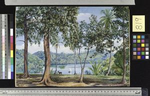 819. View from Kalutara, Ceylon