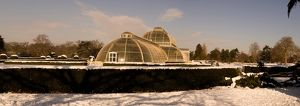 Palm House in snow