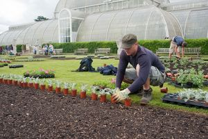 Planting out bedding, RBG Kew