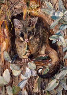 'Possum up a Gum Tree'