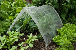 Protecting vegetables from pests