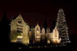 Wakehurst Mansion and Christmas Tree at night