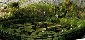 Water Lily house interior